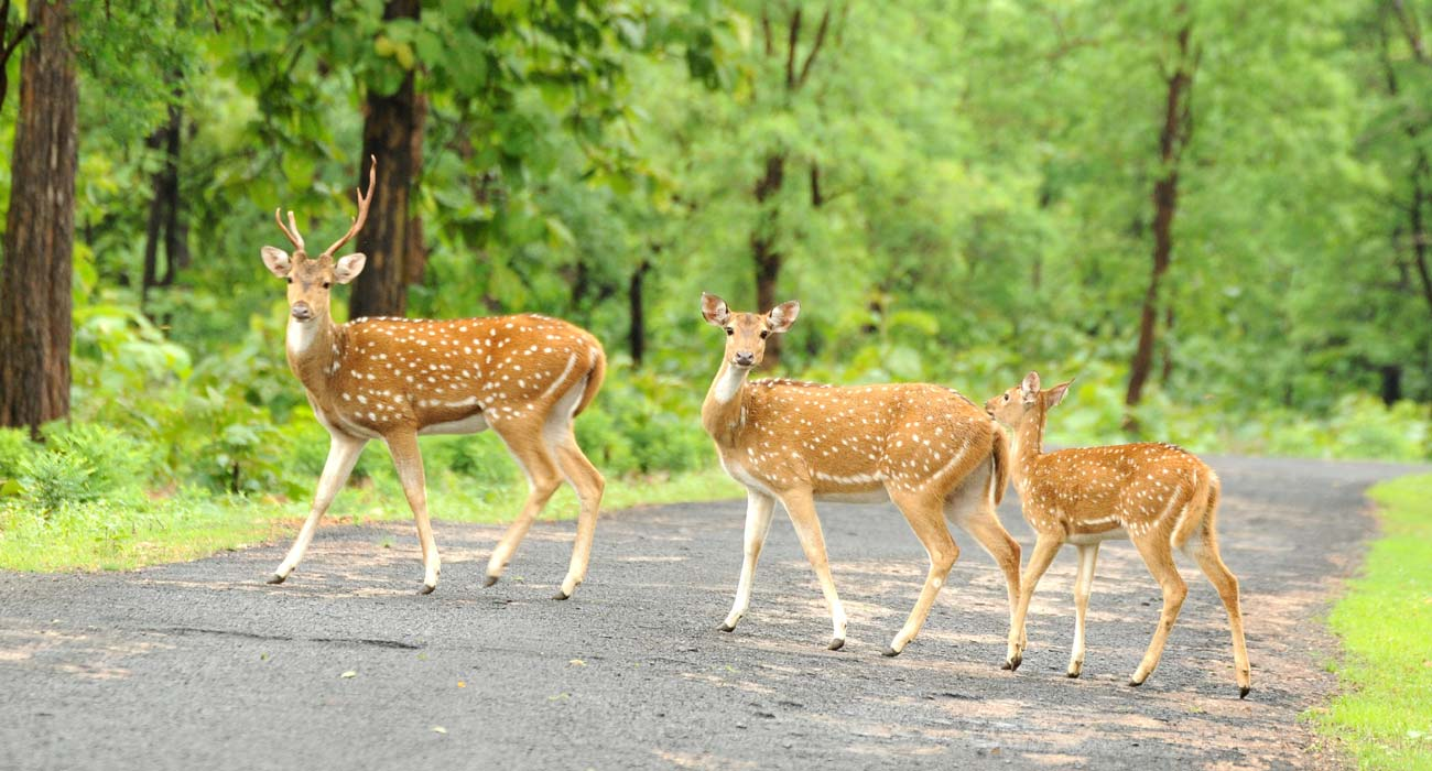 Car Hire Golden Triangle With Ranthambore